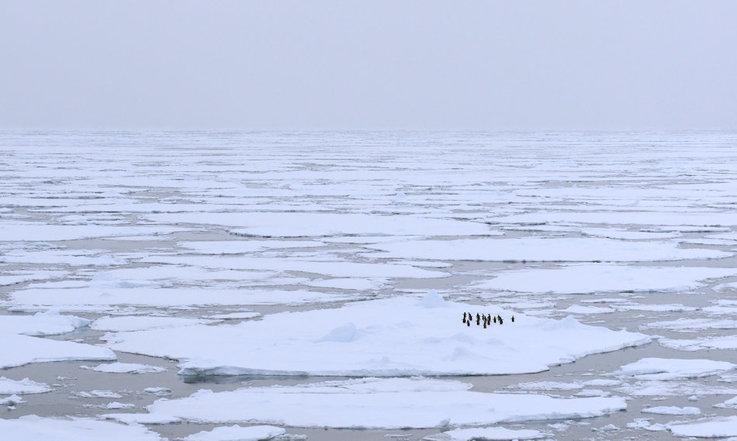Das Packeis hält Antarktika während der Wintermonate fest im Griff und die klimatischen und